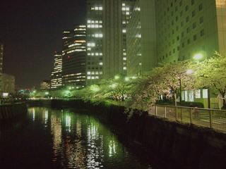 20120409_sakura1.jpg