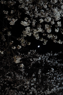 20150327jiyugaoka_cherryblossom2-1000131.jpg